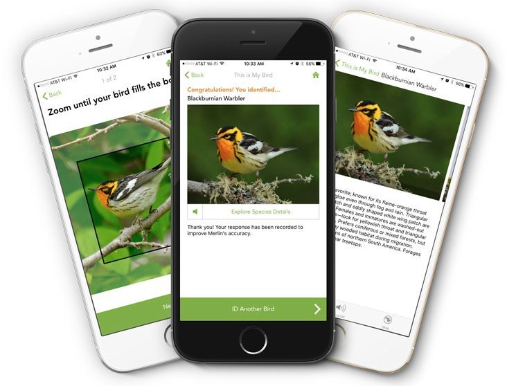 Merlin Bird Photo ID:观鸟界的 Shazam