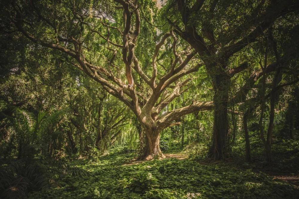 基于Java语言构建区块链(六)—— 交易(Merkle Tree)